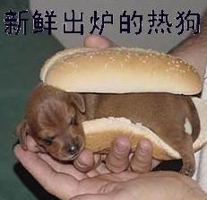 新鲜出炉的热狗